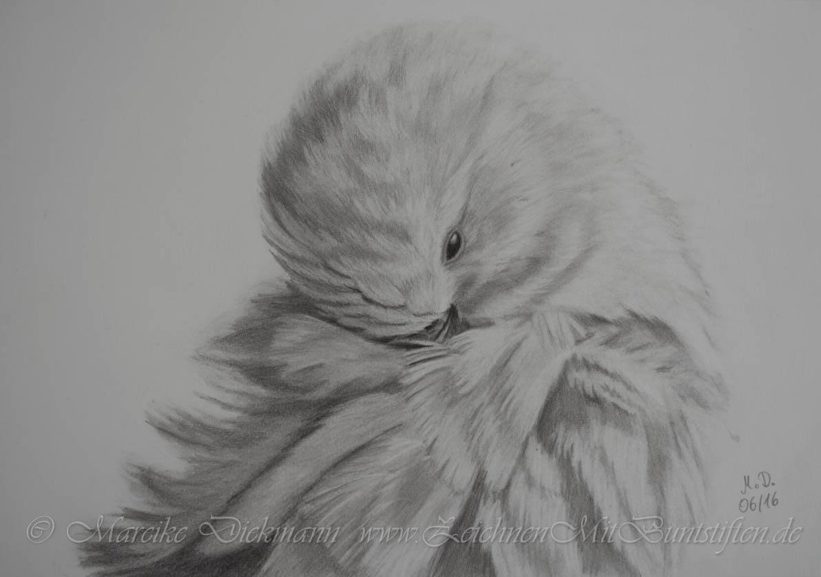 Mein Vögelchen Susi wird portraitiert